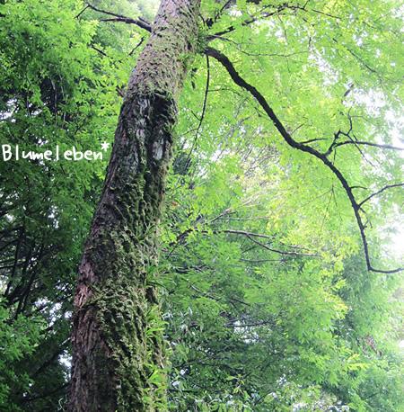 こけむした木